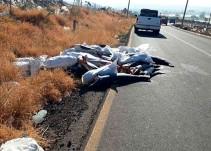 298 tiburones muertos sobre carretera de Michoacán