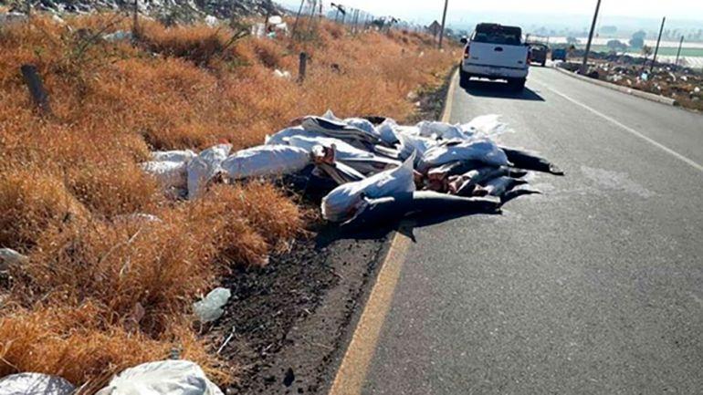 Tiburones, PROFEPA, Muerte: 298 tiburones muertos sobre carretera de Michoacán