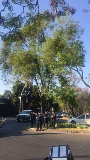 Escapa chango en Lomas de Chapultepec