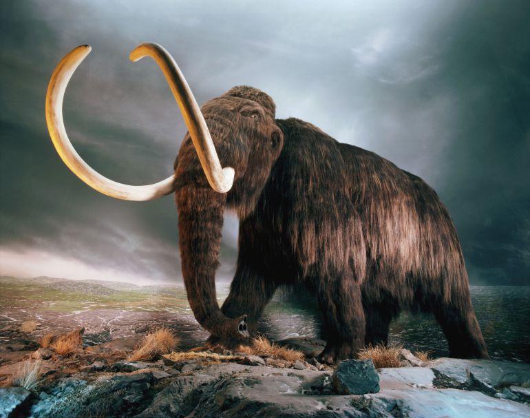 Encuentran restos de mamuts y Edad de Hielo en San Luis Potosí: Encuentran restos de la Edad de Hielo en San Luis Potosí