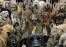 """Se viraliza una """"selfie"""" de perros"""