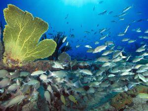 VIDEO: Buzo muestra la terrible contaminación en los océanos