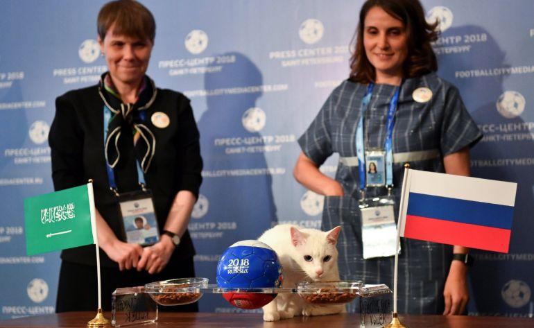 """Gato Aquiles, Rusia 2018: El gato """"Aquiles"""" es el nuevo pronosticador del Mundial"""