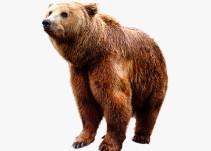 ¡Un oso hizo un acto que no vas a creer en el Mundial