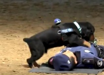Perrito realiza reanimación cardiopulmorar a policía