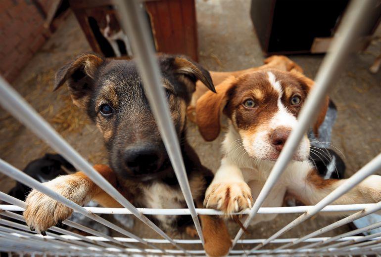 Ahorca a su perro y vecinos intentan lincharlo: Dueño ahorca a su perro y vecinos intentan lincharlo