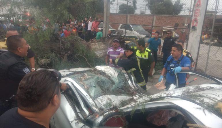 Muere una persona por caída de árbol en Ecatepec: Automovilista muere tras caerle un árbol en Ecatepec