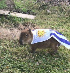 ¡A compartir este Superman uruguayo!