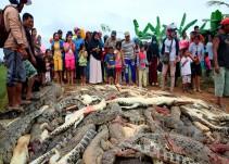 Multitud enfurecida matan a 300 cocodrilos en Indonesia