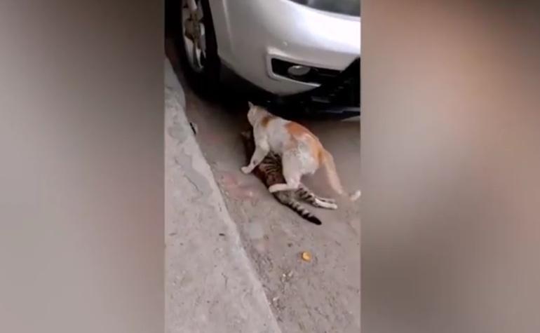 Gatito se niega a abandonar a su mejor amigo: Gatito se niega a abandonar a su mejor amigo