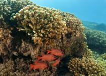 Exhortan autoridades para crear reserva de biósfera en el Mar de Cortés