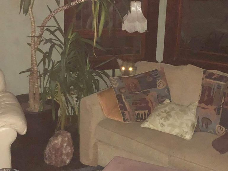 Puma invade el interior de una casa