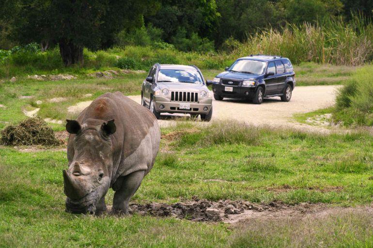 rinoceronte africam safari