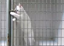 Gato 'narco' es detenido por ingresar drogas a una cárcel