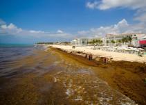 Afecta sargazo a las playas del Caribe