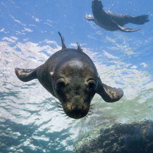 La riqueza del Pacífico Sudcaliforniano de Guerrero Negro a Los Cabos