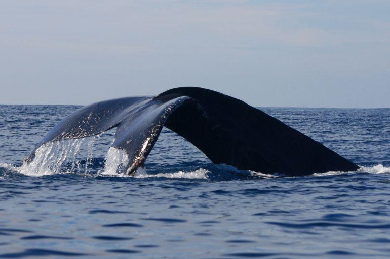 Áreas Marítimas Protegidas ¿Qué son?