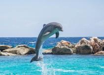 Fallece delfín en las costas de México a causa del ser humano