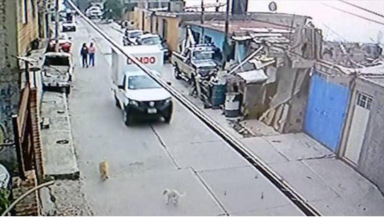 Trabajador de Bimbo es evidenciado tras atropellar un perro