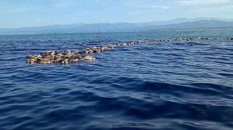 Mueren tortugas atrapadas en redes, en Oaxaca