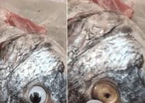 Utilizaban ojos falsos para ocultar el mal estado del pescado