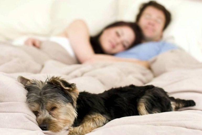 Dormir con tu mascota trae beneficios