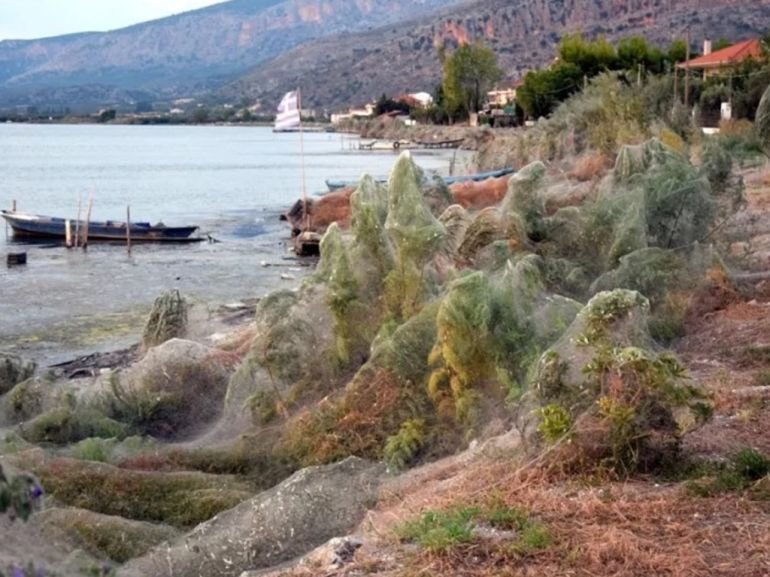 Telaraña gigante cubre playa en Grecia