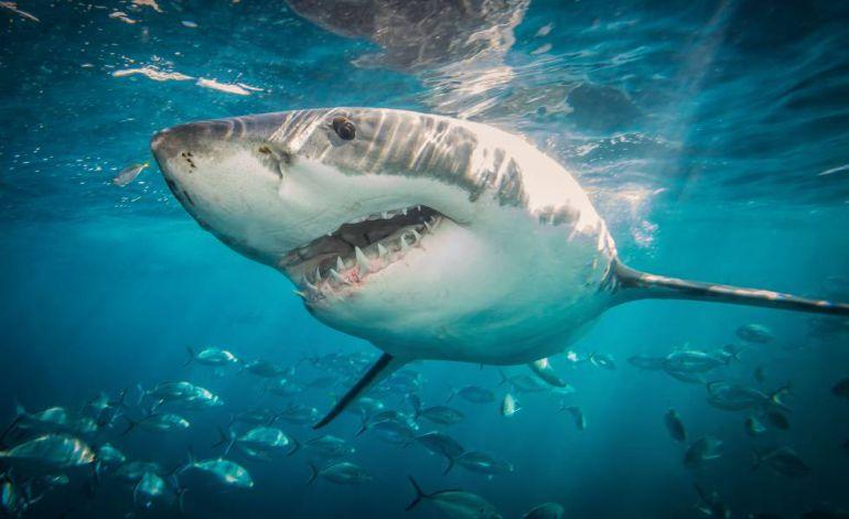 """Tiburón con cara de """"demonio"""" se vuelve viral"""