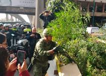 Planta de marihuana sobre Periférico
