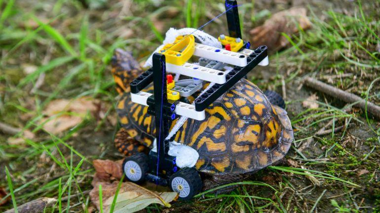Tortuga recibe prótesis de Lego
