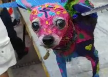 Perrito con disfraz de alebrije desata polémica