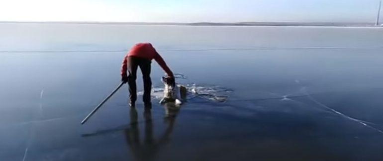 Salvan a perro atrapado en lago congelado