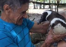 Cada año un pingüino visita al hombre que salvó su vida