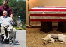 [Video] El perro Sully de George H. W. Bush lo acompaña hasta su último momento