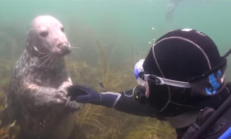 foca viral