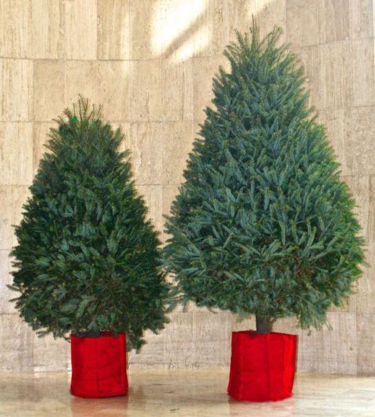 Pon tu árbol de navidad y sé amigable con el medio ambiente