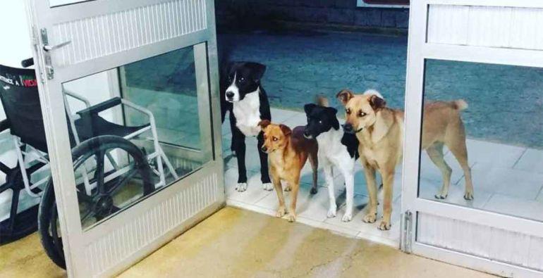 Conmueven perros que esperan a su dueño indigente afuera de un hospital