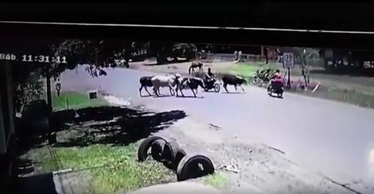 Ni Jackie Chan; vaca detiene a motociclista con patada voladora