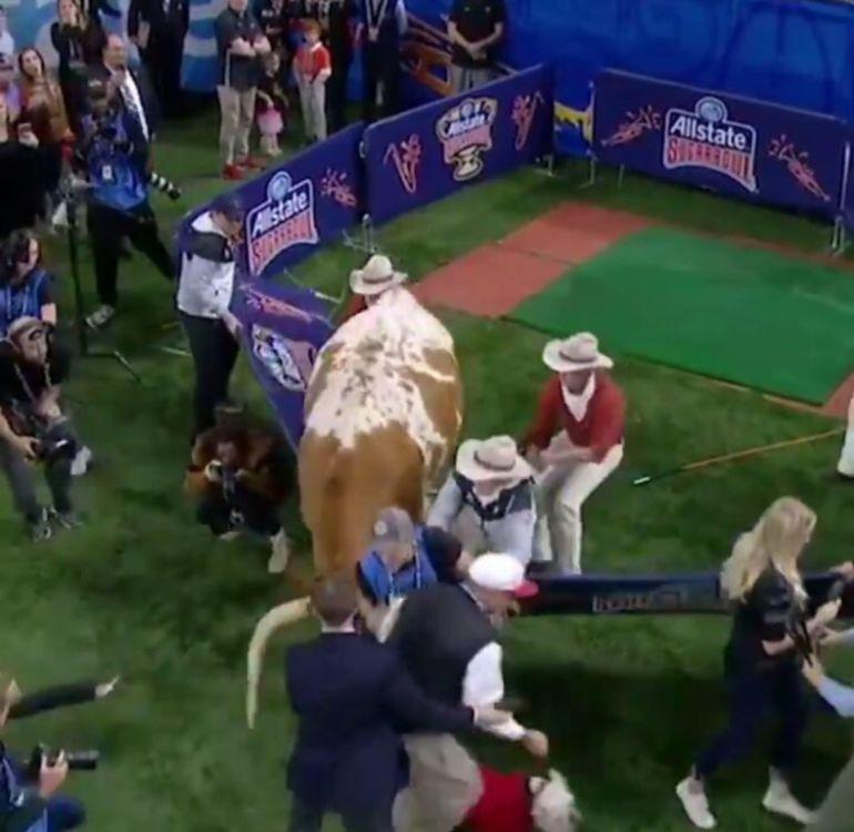 Pelea de mascotas en Futbol Americano Colegial
