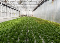 CES 2019: Mexicanos presentes con tecnología que controla invernaderos