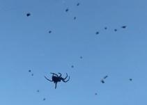"""""""Lluvia"""" de arañas sorprende a un poblado de Brasil"""