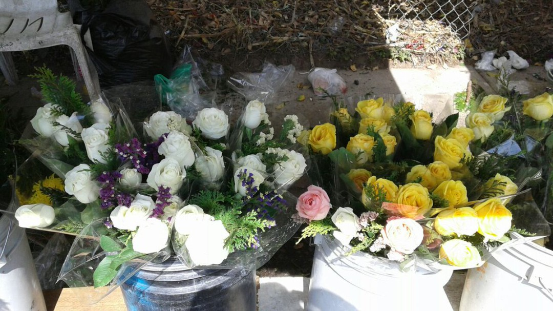 San Valentín incrementa ventas a florerías en 60%
