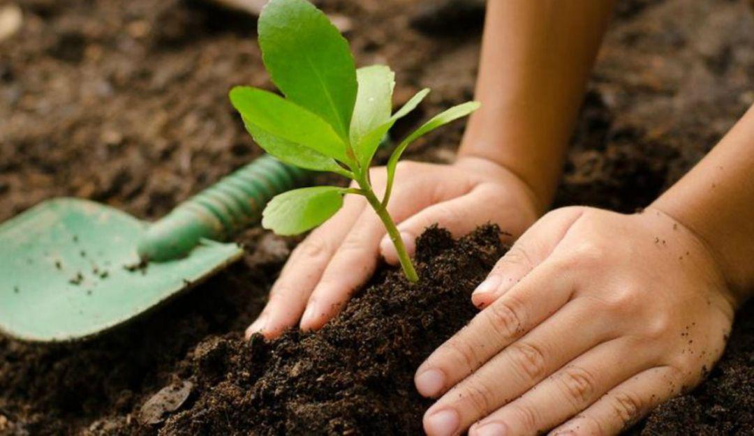 Pablo Lemus comprometido a plantar un millón de árboles en Zapopan