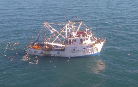 Pesca furtiva de totoaba