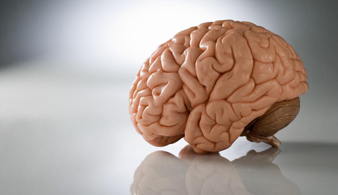 Cuidado tu cerebro envejece y pierde tamaño por culpa de estos hábitos