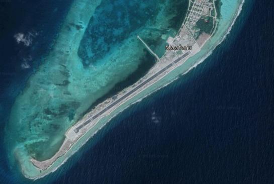 Tortuga salió del mar para desovar pero construyeron aeropuerto en la playa