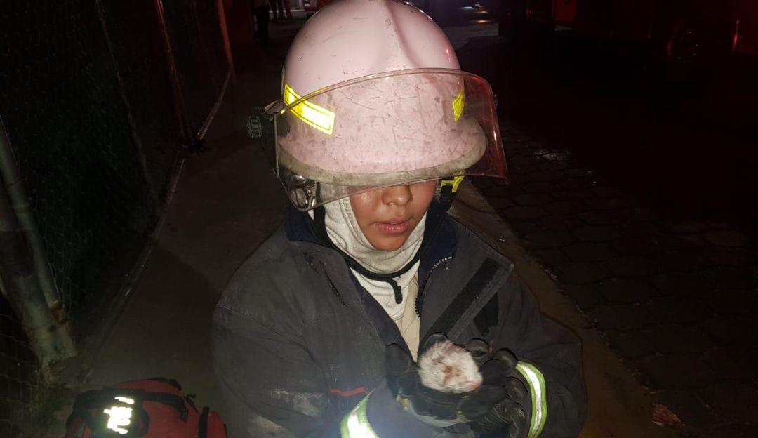 Rescatan a 4 gatitos de un incendio en Lomas del Batán