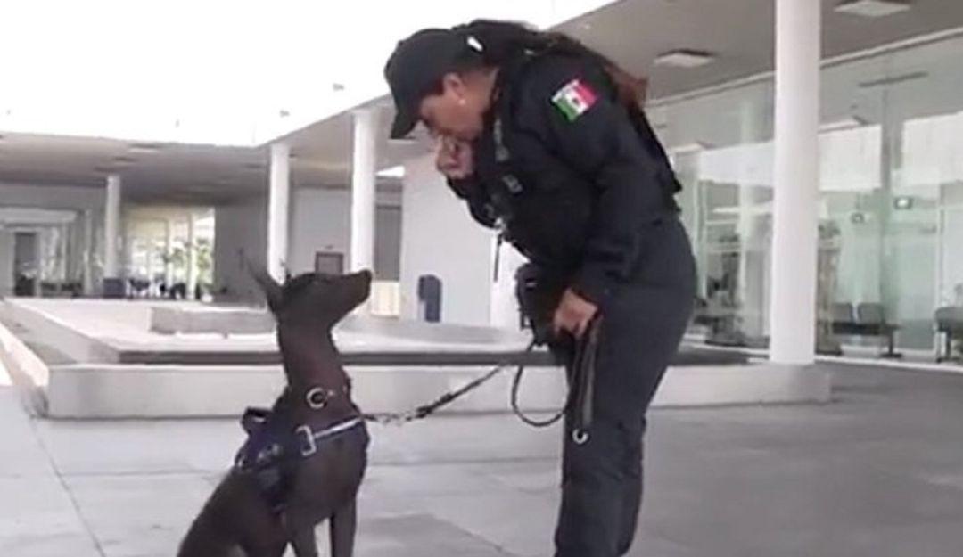 """Xoloitzcuintle en la Policía Federal: Su nombre es """"Dante"""" ¡Conócelo!"""
