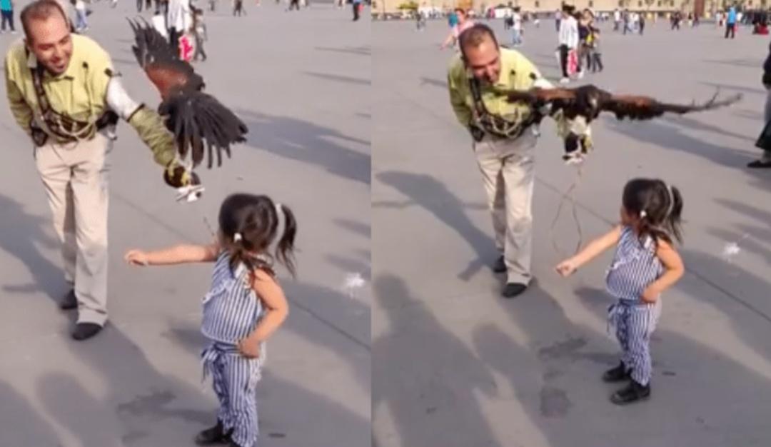 ¿En dónde se paró el águila?; el ave atacó a niña en el Zócalo de la CDMX