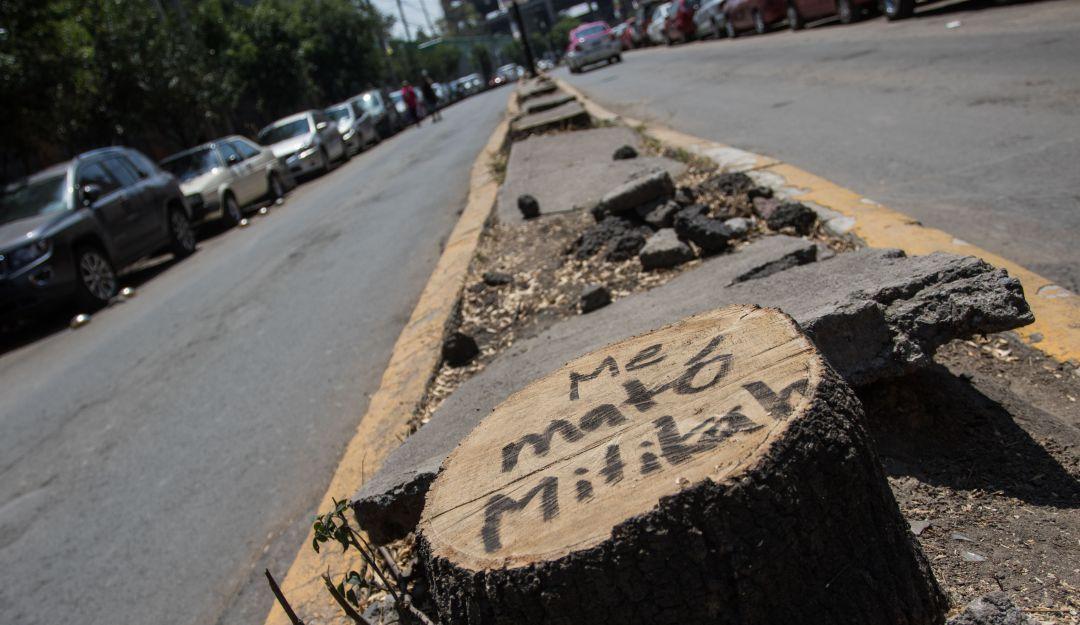 Talan árboles por construir Torre Mítikah; Claudia Sheinbaum dará sanciones
